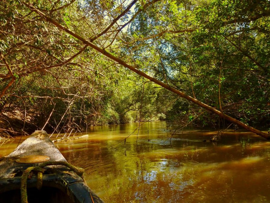 Fluss im Naturreservat Mbaracayu, Paraguay