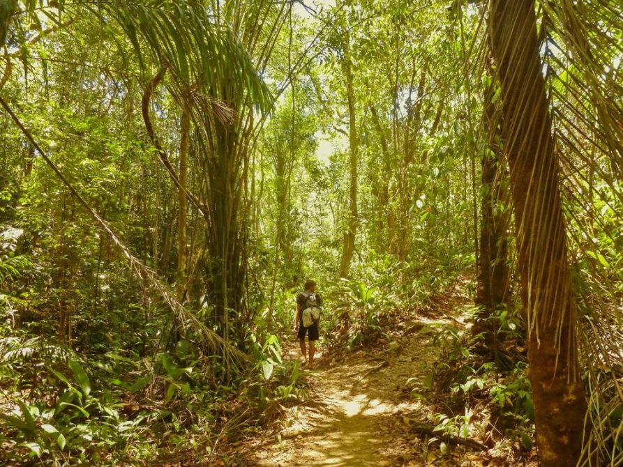 Spaziergang durch atlantischen Regenwald