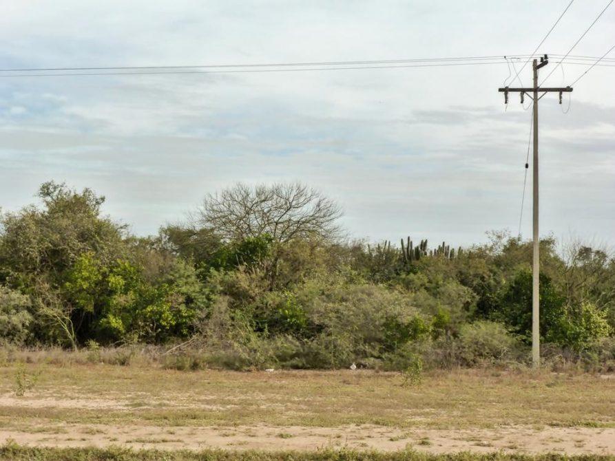 unwirtliche Landschaft des Gran Chacos, Paraguay