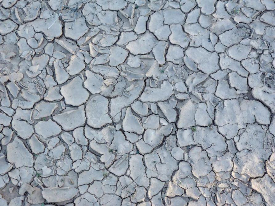 Trockener Boden im Gran Chaco, Paraguay